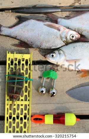 Closeup view of three fresh alive silver color wet fish catch near fishing set lying on brown wooden table top outdoor, vertical picture - stock photo