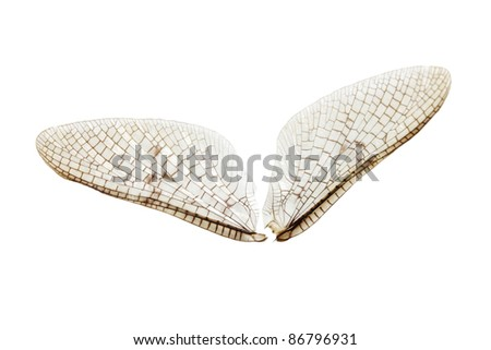 closeup - wings of a dragonfly isolated on white - stock photo