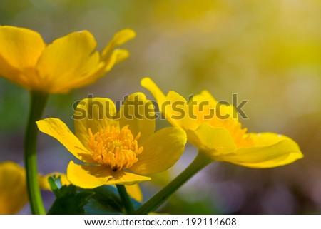 closeup yellow flowers - stock photo