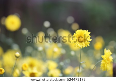 Closeup yellow flowers in Spring