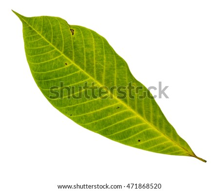 Closeup yellow leaf with isolated white background
