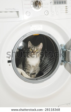 clothes washer and cat in the clothes washer - stock photo