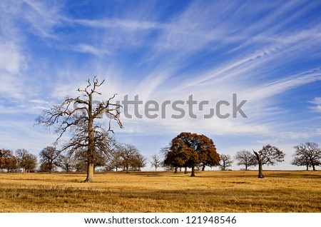 Cloud formation and blue Texas sky over winter scenic trees