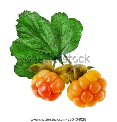 cloudberry close up isolated on white - stock photo