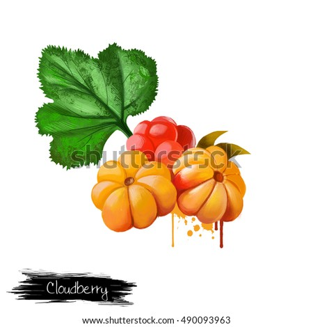 cloudberry stock photos royalty free images vectors shutterstock. Black Bedroom Furniture Sets. Home Design Ideas