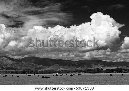 Clouds And Cows Over The Colorado Plains and Foothills
