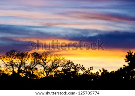 Clouds at Sunset Background with Foliage in Silhouette