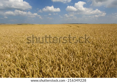 Clouds in blue sky over wheat field