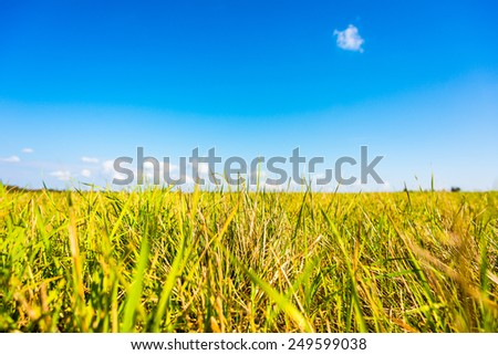 Clouds on the meadow. Focus on the grass, close up view - stock photo