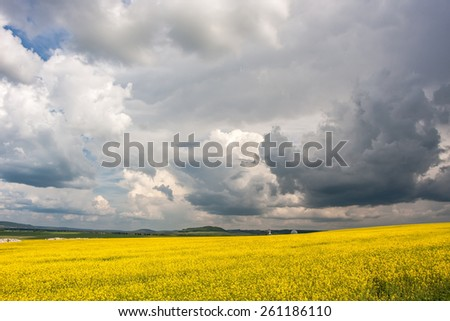 Clouds over the field of oilseed in summer - stock photo