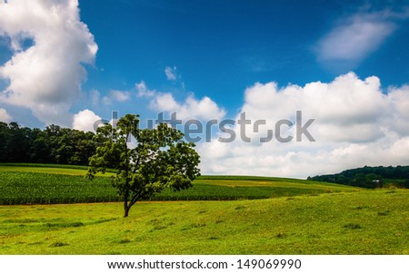 Clouds over tree in a field in Southern York County, PA. - stock photo