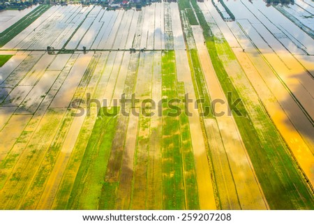 Clouds reflect on the rice field, seen from above - stock photo