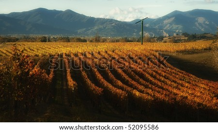Cloudy Bay winery in Marlborough, New Zealand, shot in late autumn - stock photo