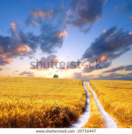 cloudy field - stock photo