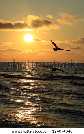 Cloudy sea sunset with seagulls - stock photo