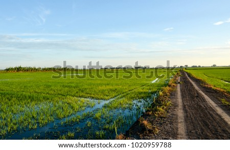 Cloudy sky on rice field.