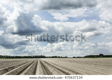 cloudy sky over a field  of potatoes