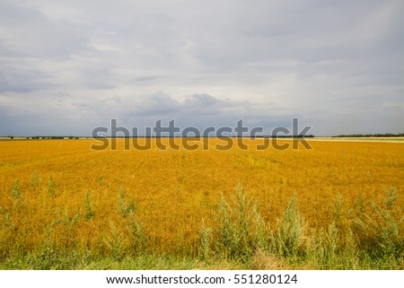 cloudy sky over golden field. rain before