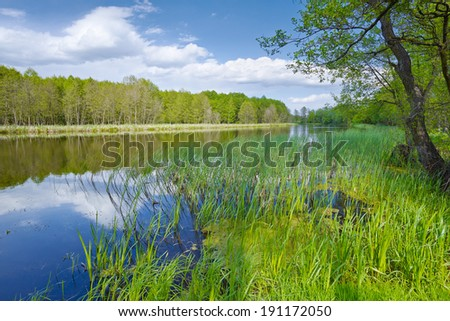 Cloudy spring landscape. Trees at riverbank. Sweet Flag in flood waters of The Narew River, Poland. - stock photo
