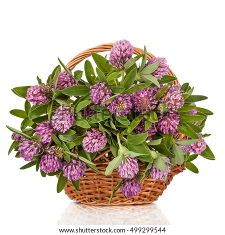 Clover. Beautiful Wild Flowers Bouquet. Wildflowers in basket isolated on white background.