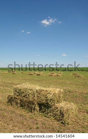 Clover field in early summer after harvest - stock photo