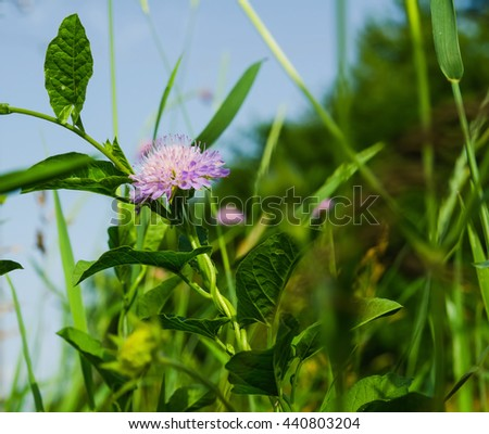 clover flower in green grass backgrounds - stock photo