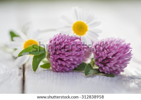 clover flowers and daisies on the table - stock photo