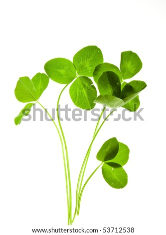 clover isolated on a white - stock photo