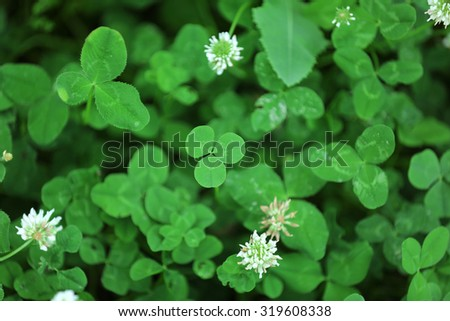 Clover leaves background - stock photo