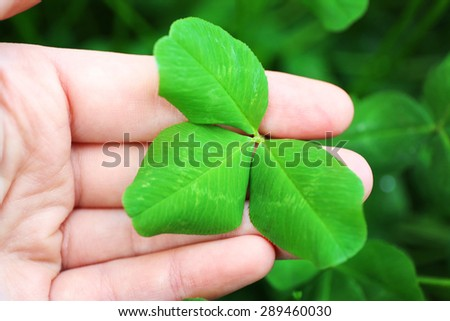 Clover leaves in female hand, closeup - stock photo
