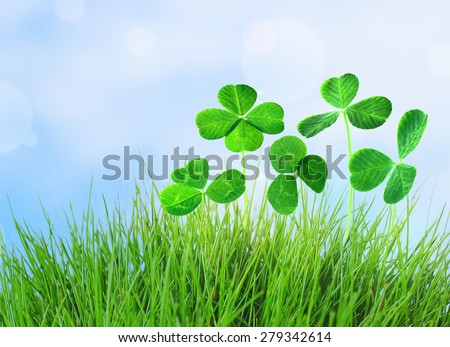 Clover leaves in grass on blue sky background - stock photo