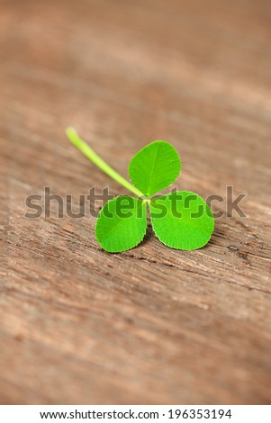 clover on a wooden surface - stock photo