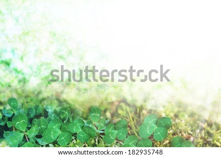 clovers background - stock photo