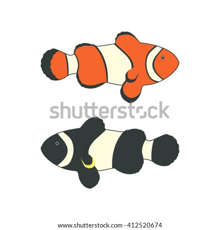 Clownfishes or anemonefishes. Isolated on a white background. - stock photo