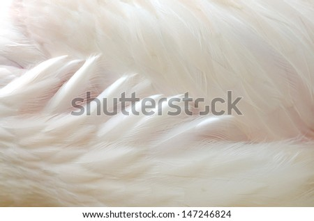 Clposeup of side greater Flamingo feathers - stock photo