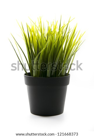 clump of green grass in black pot isolated