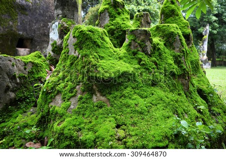 Clumps of moss on the ground in the Buddha Park, Vientiane Laos