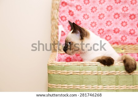 Clumsy little kitten in the laundry basket - stock photo