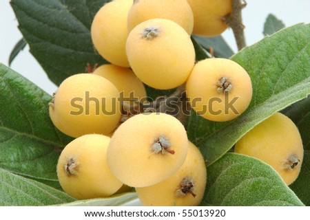 Cluster of loquats - stock photo