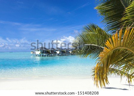 coast of a tropical island with palm tree on the beach and in the sea bungalow - stock photo