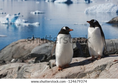 Coast of Antarctic Peninsula. Excellent sunny weather. Colonies of penguins. Clear blue sea water. Snow and icebergs of Antarctica.