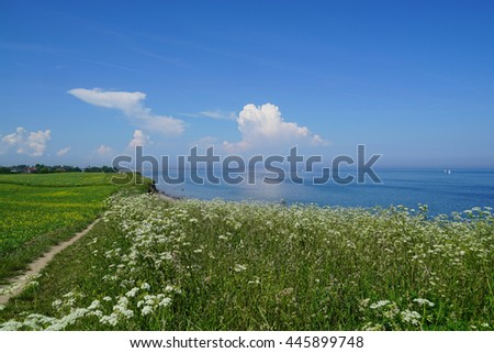 Coast view from the cliffs of the baltic steep coast down to the coastline with a beach and some sailing boats in the background, wildflowers in the foreground. - stock photo