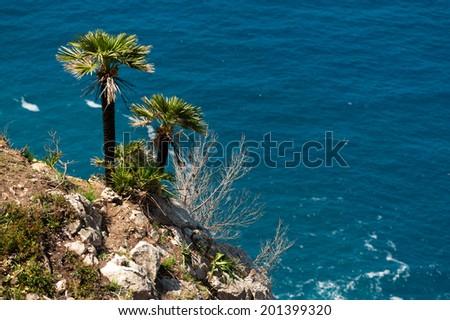 Coast with palm trees - stock photo