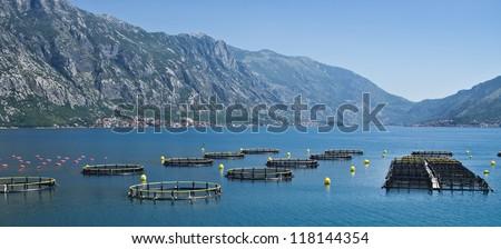 Coastal fish farming in Montenegro - stock photo