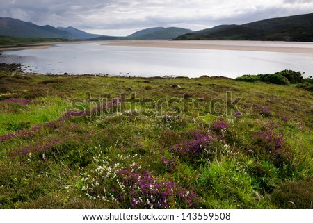Coastal landscape with colorful flowers. - stock photo