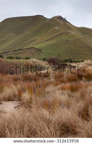 coastal landscape with marram grass growing on sand dunes, Pouawa near Gisborne, East Coast, North Island, New Zealand  - stock photo