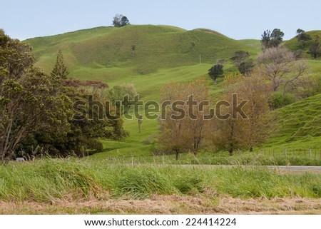 coastal pastoral farm land in New Zealand  - stock photo