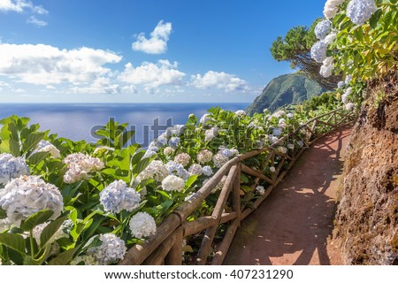 Coastal path with hydrangea in Sao Miguel, Azores Islands