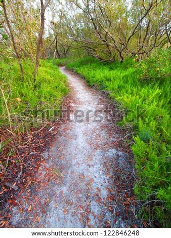 Coastal Prairie Trail in Everglades National Park of Florida - stock photo