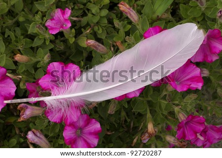 Coastal sea gull feather laying on a bed of purple flowers